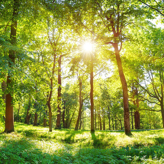 Environnement et espaces verts