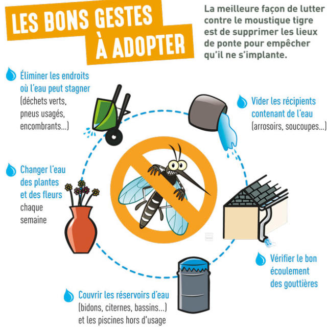 Moustique Tigre Bons Gestes Web